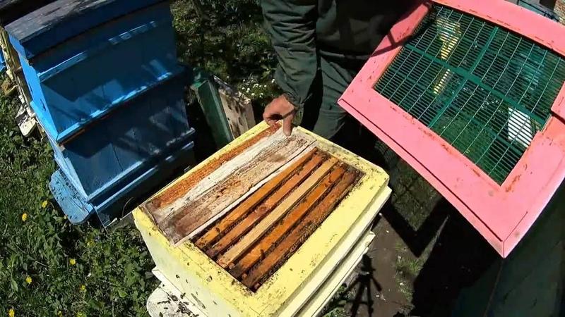 Второе расширение Даданов Прикарпатська пасіка №12 Пчеловодство в Украине