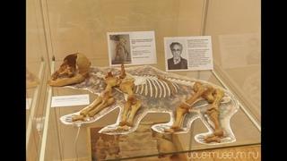 Скелет пещерного медвежонка #15 Урал в подарках. 4K