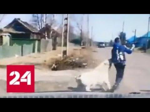 Спасли от зубов гигантского пса нападение агрессивной собаки на школьника попало на видео