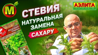 МЕДОВАЯ ТРАВКА – Натуральная Замена Сахару это Стевия Трава