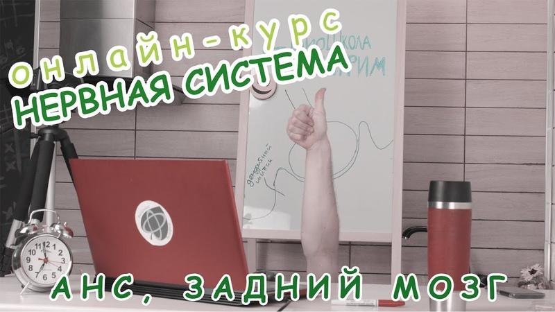Серия 17 АНС ЗАДНИЙ МОЗГ БиоШкола Пилигрим Даня Бобровский курс Нервная система