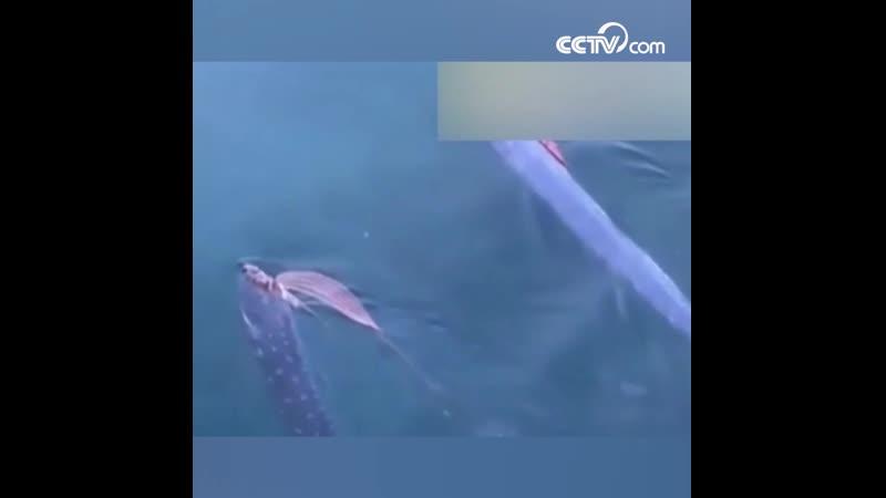 В японском порту обнаружили два 5 метровых сельдяных короля