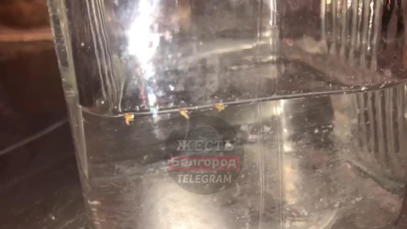 Неизвестные живые существа вытекают вместе с водой из крана под Белгородом