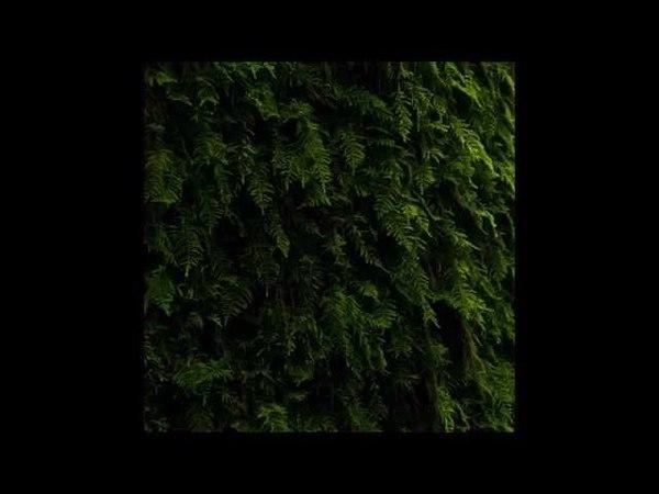 Hydrangea - Ananké [SS20]