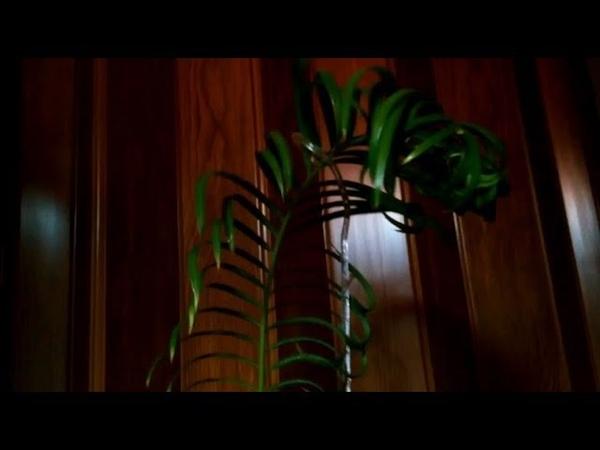 Цикас 4 Саговник Саговая пальма Осталась одна вайя Опора для растений
