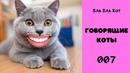 Говорящие коты. Приколы с животными. Смешные животные. Лучшая подборка 007