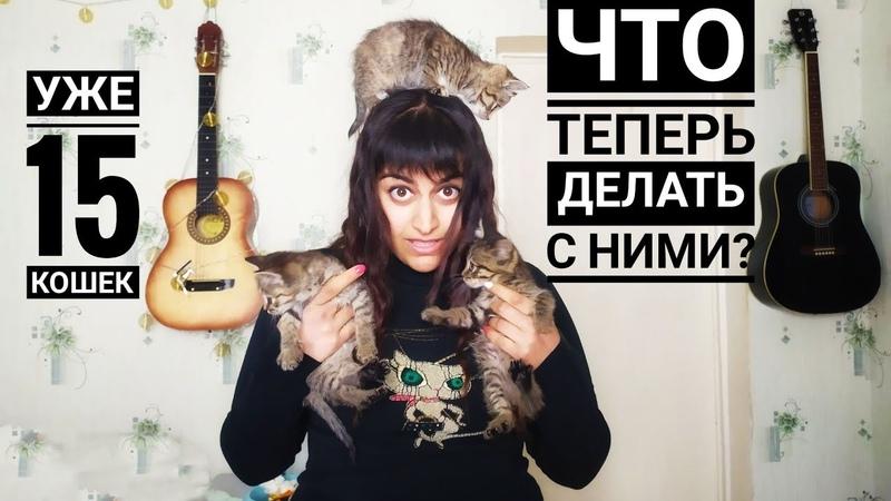 Влог Привезли детей Британца 😱 Покупки четвероногим Пристройство котят в добрые руки