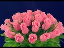 Цветы из Конфет/ Букет из Конфет/ Розы из конфет и гофрированной бумаги/ мастер класс DIY