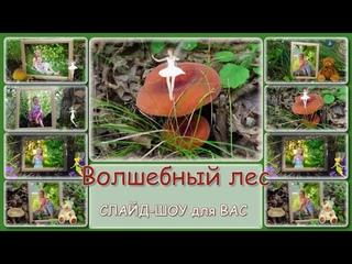 Фото-заменяемый проект  ProShow Producer   Magic forest     Волшебный лес    За грибами