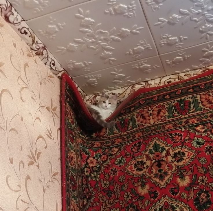 """""""Сегодня я нашел кошaчье гнездo""""."""