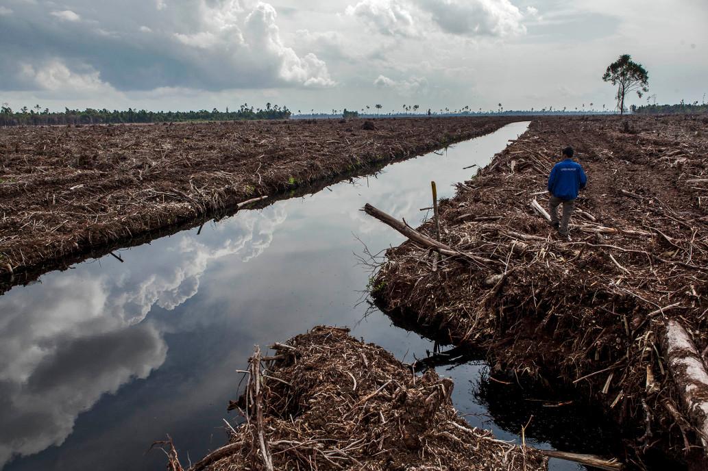 Ученые говорят, что потребуется огромное количество коллективных действий, чтобы обратить вспять вырубку лесов и спасти цивилизацию от краха.