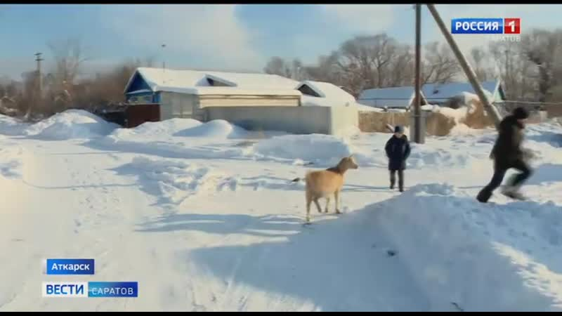 Юный фермер из Аткарска разводит коз