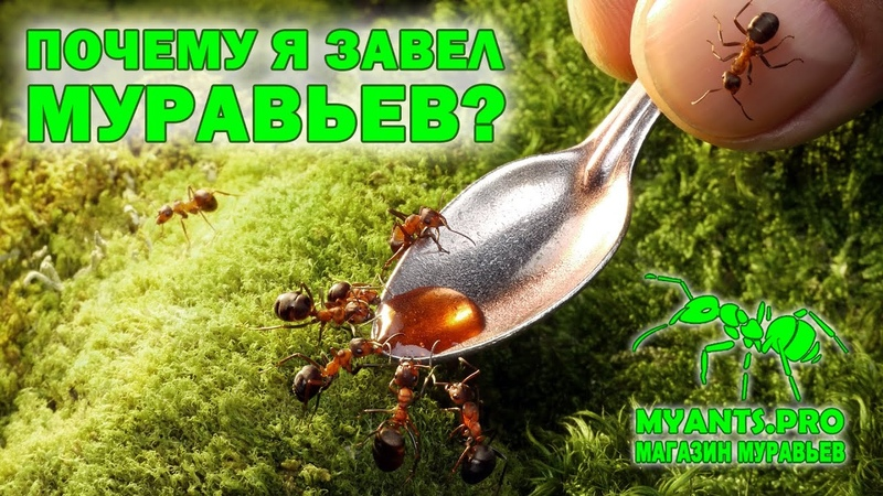 Все виды наших муравьев и формикариев за два года от Жнецов до Муравьев Пуль Мирмеций и Салтаторов