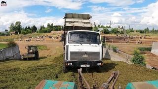Затаскиваю грузовики на сенажную яму! Рабочие будни в колхозе!
