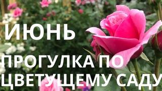 Июнь. Прогулка по цветущему саду.