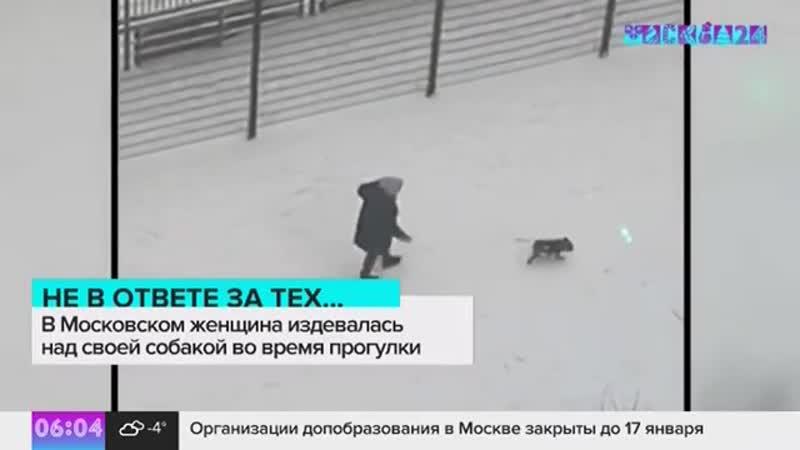 В городе Московский в микрорайоне ПМГП на улице Бианки женщина избила свою собаку