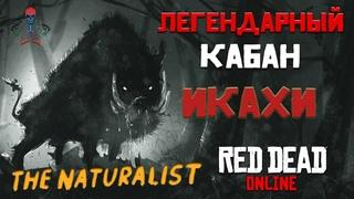 Read Dead Online (RDR Online) - Легендарные животные / Кабан Икахи / Усыпить и взять образец / 4K