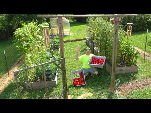 Grow a Vegetable Garden at Home JULY 26th container gardening how to start plant tomato seeds