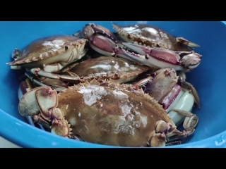 CRABS DUNGENESS COOKED IN CAULDRON