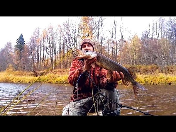 8 октября Щука с любимой реки Унжи Глухари на соснах Костромские боровики переростки 2020