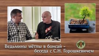 Перспективы ведьминых мётел в бонсай - беседа с С.Н. Горошкевичем