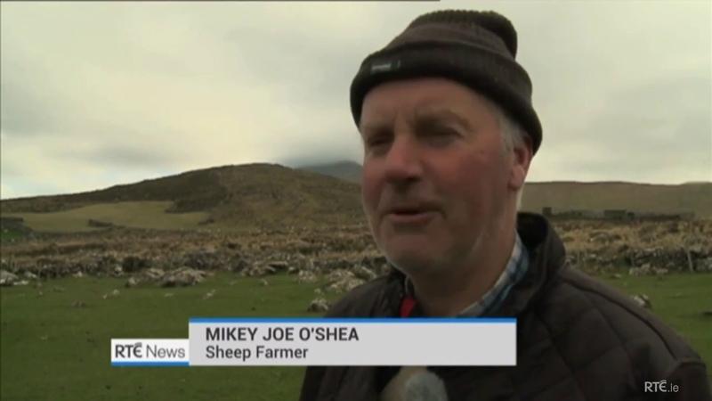 Irish Farmers Lose Their Sheep Mad Accent