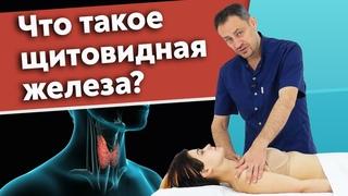 Почему щитовидная железа важна для нашего организма? / Как обнаружить проблему с щитовидной железой?