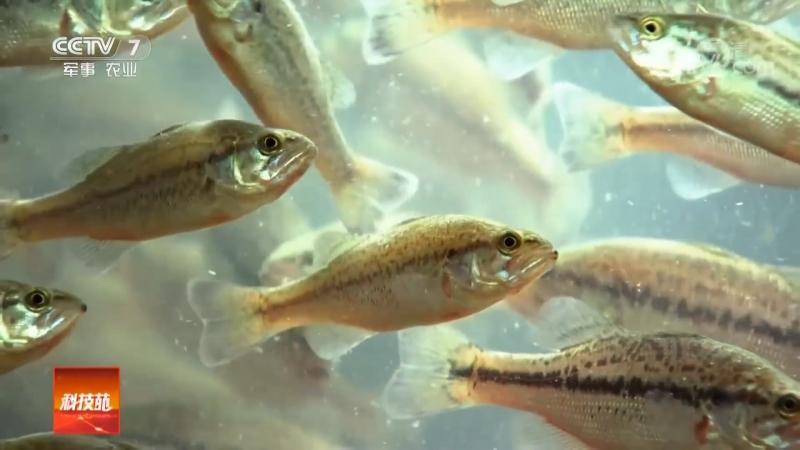 Технология разведения рыбы в металлических контейнерах ДаТе СянЦзы Лай Ян Юй большой железный ящик для выращивания рыбы П