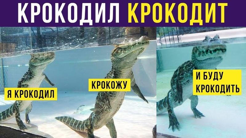 Приколы Я крокодил крокожу и буду крокодить Мемозг 218