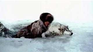 Редкий случай, волк спас охотника провалившегося под лед...