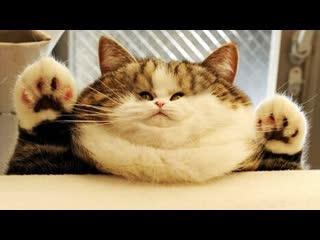 Смешные коты | Подборка за неделю #18 | Котопятница