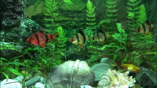 Релакс аквариум. Аквариумные рыбки и успокаивающая музыка. Relax video. Антистресс.