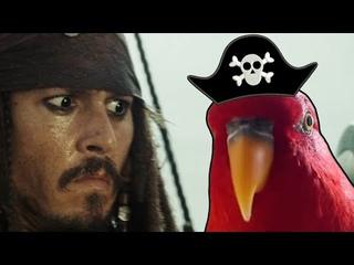 Pirate Birb