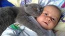 Gatos Protegiendo Bebés Los Gatos Aman a los Bebés 😺👶