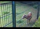 В мире Виттлиховских животных