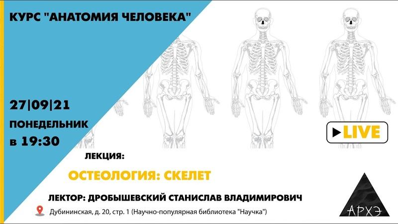 Лекция С В Дробышевского Остеология скелет курса Анатомия человека