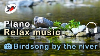 Beautiful piano with birdsong for sleep and relaxation 🌿 Relax by the river in clear weather