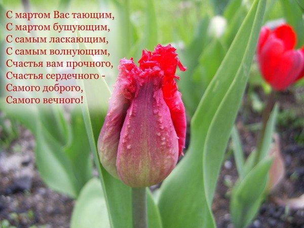 том, поздравление с 8 марта с мартом вас тающим ровного аккуратного