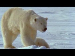 BBC Рассказы о животных BBC Wild Tales episodes 17 20 1996 DVDRip