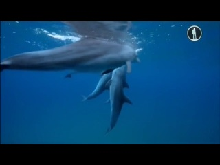 Dolphins on drugs Дельфины под кайфом