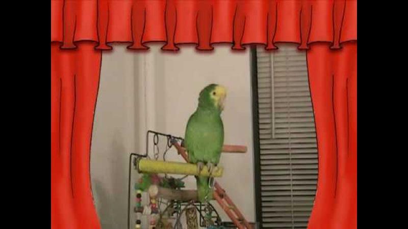 СУПЕР Говорящий попугай Амазон ЮЗИК - Super talking parrot on YouTube