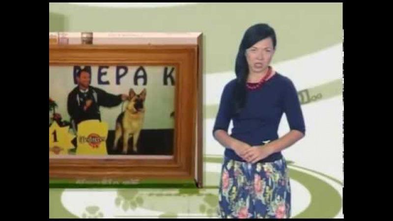GoodDog Чихуахуа Мужество немецкой овчарки Чипирование собак
