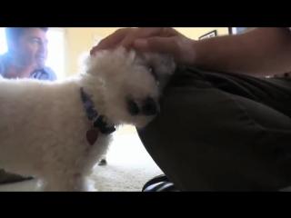 БРОШЕННЫЕ животные ДО и ПОСЛЕ спасения (ВИДЕО)