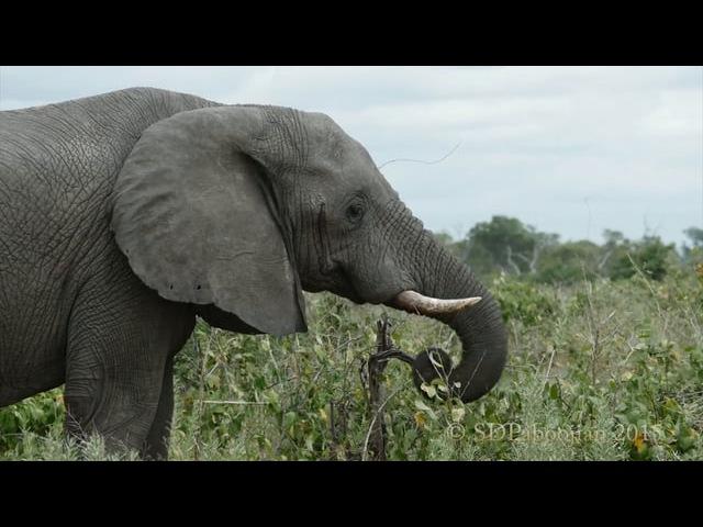 Botswana-Mar15 Elephants