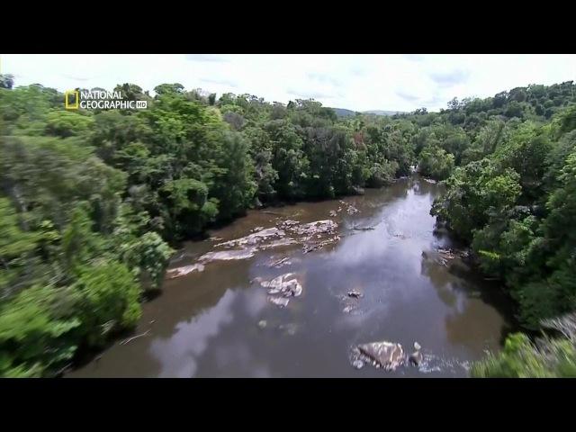 Хранители природы Французская Гвиана National Geographic
