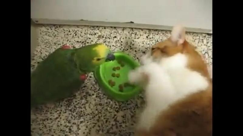 Кто на кухне настоящий босс: попугай или кот?