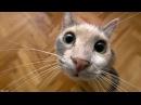 Приколы с кошками видео смеяться до слез вот и смейся