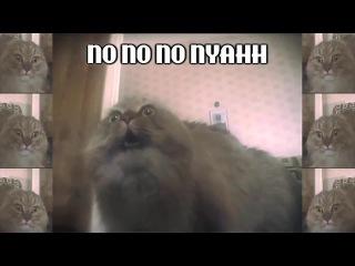NONONONO Cat (Jake Benson Remix)