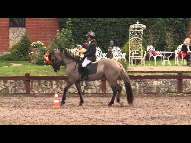 Вятка Московии 2013 Региональная выставка лошадей в ЧКСК Лаир 25