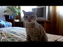 Кошка простыла, насморк и чихает